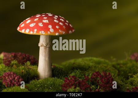 Closeup of red fly agaric toadstoels that can be used as fairy tale backgrounds - Stock Image