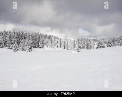 snow covered trees in a wooded winter mountain landscape with stormy grey skies - Stock Image