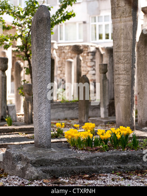 Gravestones and yellow flowers in the cemetery at Kara Ahmet Pasa Mosque, Topkapi, Istanbul, Turkey - Stock Image