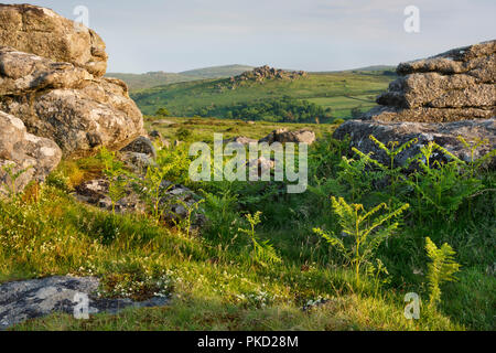 View from Hayne Down to Hound Tor in Dartmoor National Park - Stock Image