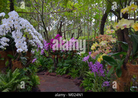 The National Orchid (Orchidaceae) Garden, Singapore SIN - Stock Image