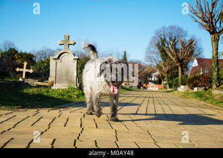 Beautiful dog is trotting on a sunny day along a cemetery avenue made of yellow bricks. Blurry background. Visible - Stock Image