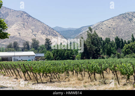 Vineyard in Maipo Valley Santiago do Chile - Stock Image