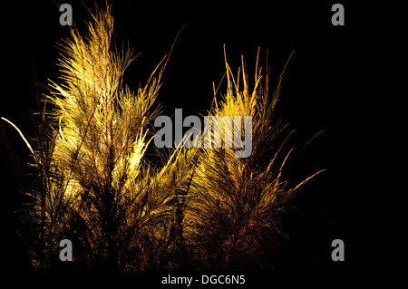 beach grass illuminated at night - Stock Image