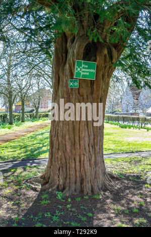 Fire assembly point safety signs attached to a Yew tree - Stock Image