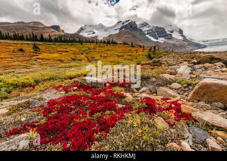 Barren Landscape, Glacial Valley, Mount Athabasca with Saskatchewan Athabasca Glacier, Icefields Parkway, Jasper National Park - Stock Image