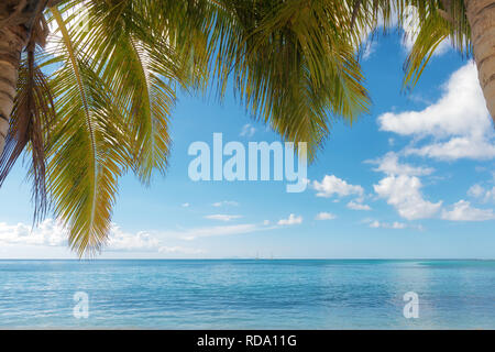 palm trees foreground on calm tropical turquoise water background, blue cloudy sky,Saint Anne beach, Guadeloupe, French West Indies. - Stock Image