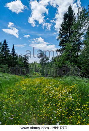 Trail in the Lutsen Mountains resort area, as seen on a beautiful spring day. - Stock Image