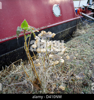 Hoarfrost on the South Oxford Canal City of Oxford Oxfordshire Oxon England hoarfrost hoar frost canal canals boat - Stock Image