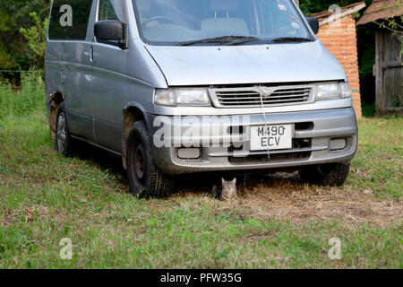 cat shelters from the sun in the shade beneath an old van parked in a garden in zala county hungary - Stock Image