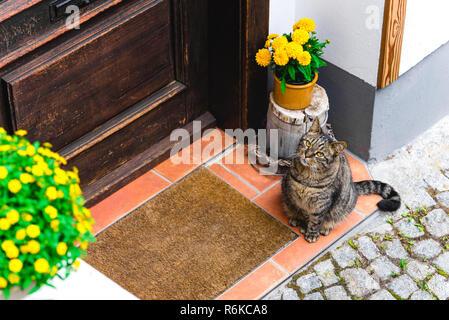 Cat waiting for host in front of the door - Stock Image