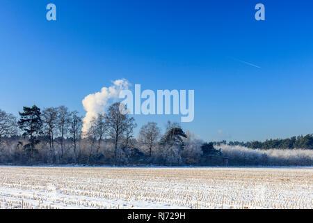 Bäume in Winterlandschaft - Stock Image