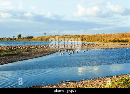 Snettisham RSPB reserve showing gravel pits and lagoons managed by the Royal Society for the Protection of Birds, - Stock Image