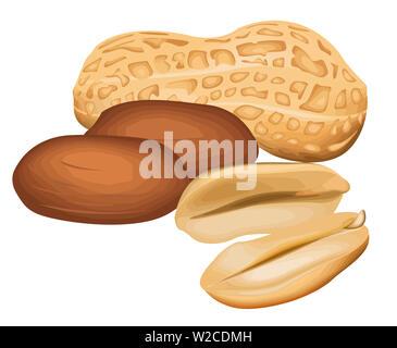 peanut nutrition snack natural bown nutshell illustration - Stock Image