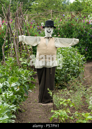 Smartly dressed scarecrow in allotment vegetable garden, Derbyshire,UK - Stock Image