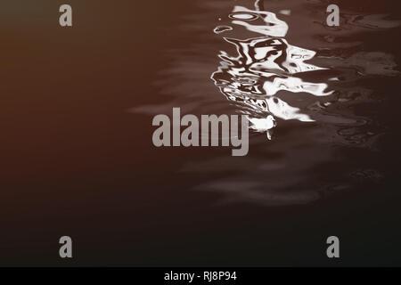 Verzerrte Spiegelung eines Verkehrsschildes auf der Wasseroberfläche durch die eine Möwe schwimmt - Stock Image