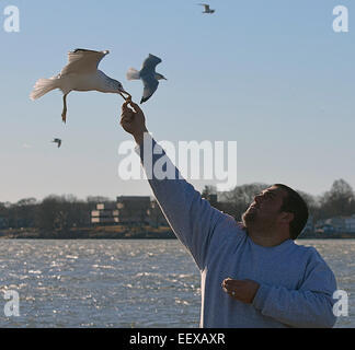 Branford CT USA Charlie Cassone of Branford feeds the Sea Birds at Branford Point as the winds picked up Sunday - Stock Image