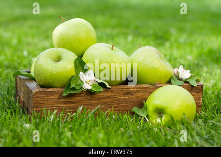 Fresh garden green apples in box. On grass meadow with copy space for your text - Stock Image