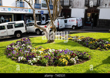 Pretty flowers in a square in Sao Miguel The Azores - Stock Image