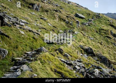 Rangers Path, Snowdon - Stock Image