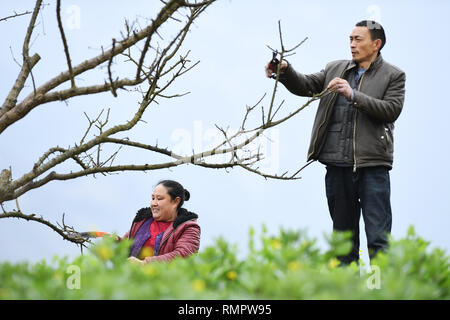 Chongqing. 16th Feb, 2019. Farmers trim plum tree branches in Quchi Town of Wushan County in southwest China's Chongqing, Feb. 16, 2019. The plum planting acreage in Wushan totals 220,000 mu (about 14, 667 hectares). Credit: Wang Quanchao/Xinhua/Alamy Live News - Stock Image