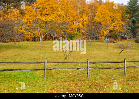 Indian summer - Stock Image
