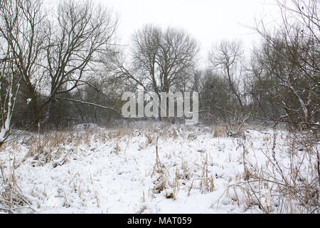 Snow-covered woodland clearing in winter - Stock Image
