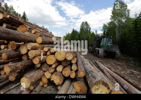 Stacked timber waiting for transport to paper mills. In the background a parked forestry harvester. - Stock Image