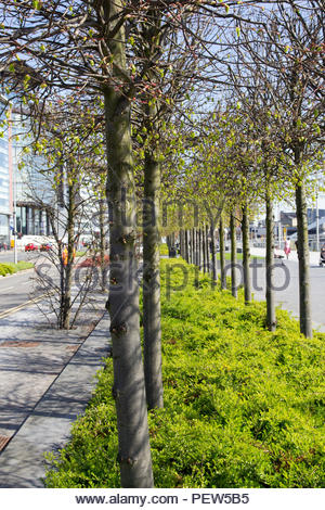 Tree-lined walkways showing some trees and bushes. - Stock Image