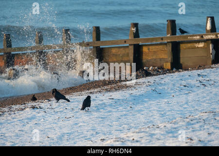 Ferring west Sussex, UK. Friday 1 st Febuary. UK weather. After moderate snowfall last night Ferring wakes to snow covered beaches. Â Credit: Photovision Images News/Alamy Live News - Stock Image
