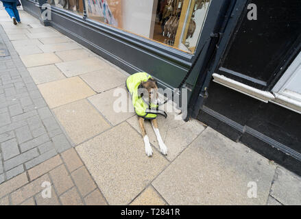 Dog patiently waiting for its master - Stock Image
