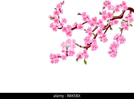 Sakura. Cherry flowers with buds and leaves on a branch. Can be used for cards, invitations, banners, posters. illustration - Stock Image