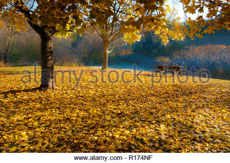 Fallen leaves on ground in autumn in Rouge National Urban Park in Toronto Ontario Canada - Stock Image