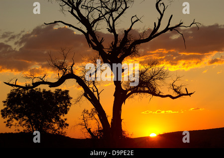 Sunset. South Africa - Stock Image