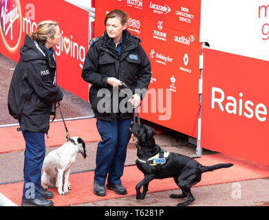 London, UK. 28th April 2019, Two police officers with their sniffer dogs at the finish line of the London Marathon.Credit: Keith Larby/Alamy Live News - Stock Image