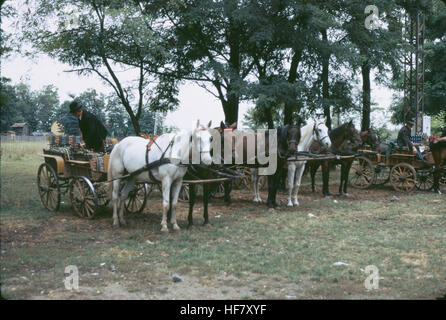 Horses and carriages in the Puszta, Hungary.  The steppe lands of the Puszta is a famous place for horse breeding - Stock Image