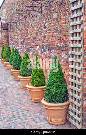 Line of Emerald Greens, Wentworth Garden Centre, Rotherham, Nature - Stock Image