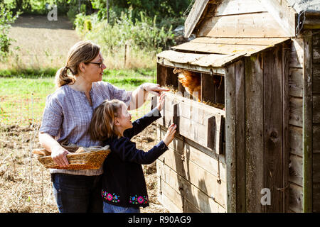 Woman and girl collecting eggs from a chicken house. - Stock Image