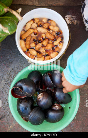 High angle shot of living grub worm and snails in Nanay market in Iquitos, Peru. The maggots, called Suri, are a delicacy served roasted on a stick. - Stock Image