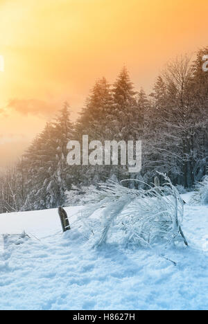 landscape of forest in winter at sunset - Stock Image