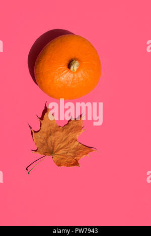 Bright orange hokkaido pumpkin dry maple leaf on solid fuchsia pink background. Sunlight strong shadows. Funky pop art style. Thanksgiving autumn harv - Stock Image