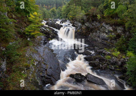 Rogie Falls waterfall where there is a salmon leap on the Black Water river, near Contin, Ross-shire, Scottish Highlands, Scotland, uk - Stock Image