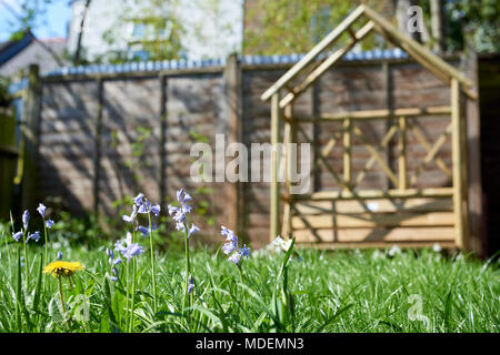 English back garden with virginia bluebells in focus in the foreground and wooden arbour bench out of focus in the background. - Stock Image