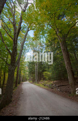 Forest road, Vermont, United States of America - Stock Image