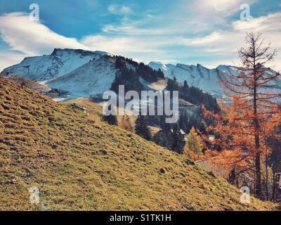 Autumn tree with snow covered mountain range - Stock Image