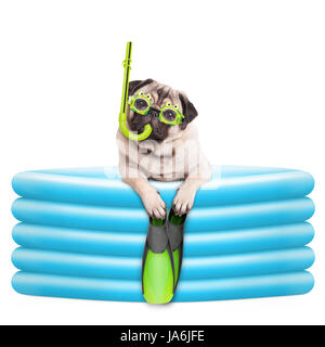 funny summerly pug dog with goggles, snorkel and flippers in inflatable pool, isolated on white background - Stock Image