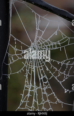 Spider's web (arachnid) on a garden railing with intricate detail frozen white by a hard overnight frost - Stock Image