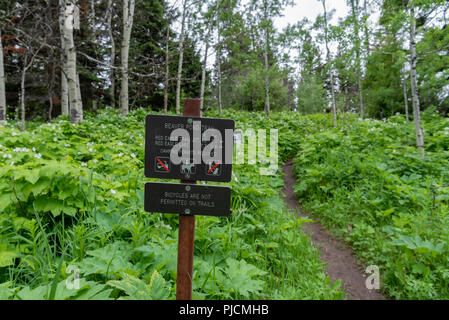Beaver Pond Trailhead Sign in Glacier during early summer - Stock Image