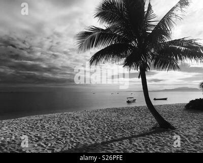 A palm tree and ocean. Tavarua island, Fiji. - Stock Image