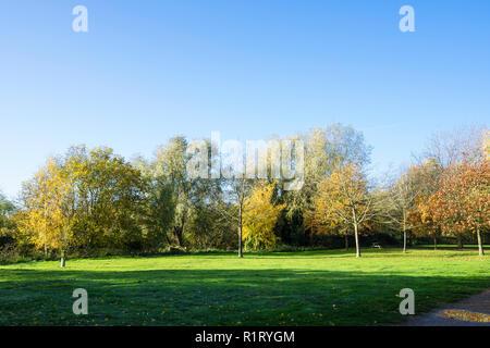 Milton park in autumn colour cloak Cambridge UK 10/11/2018 - Stock Image